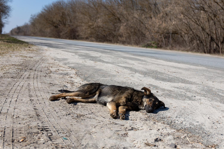 dog asleep on roadside