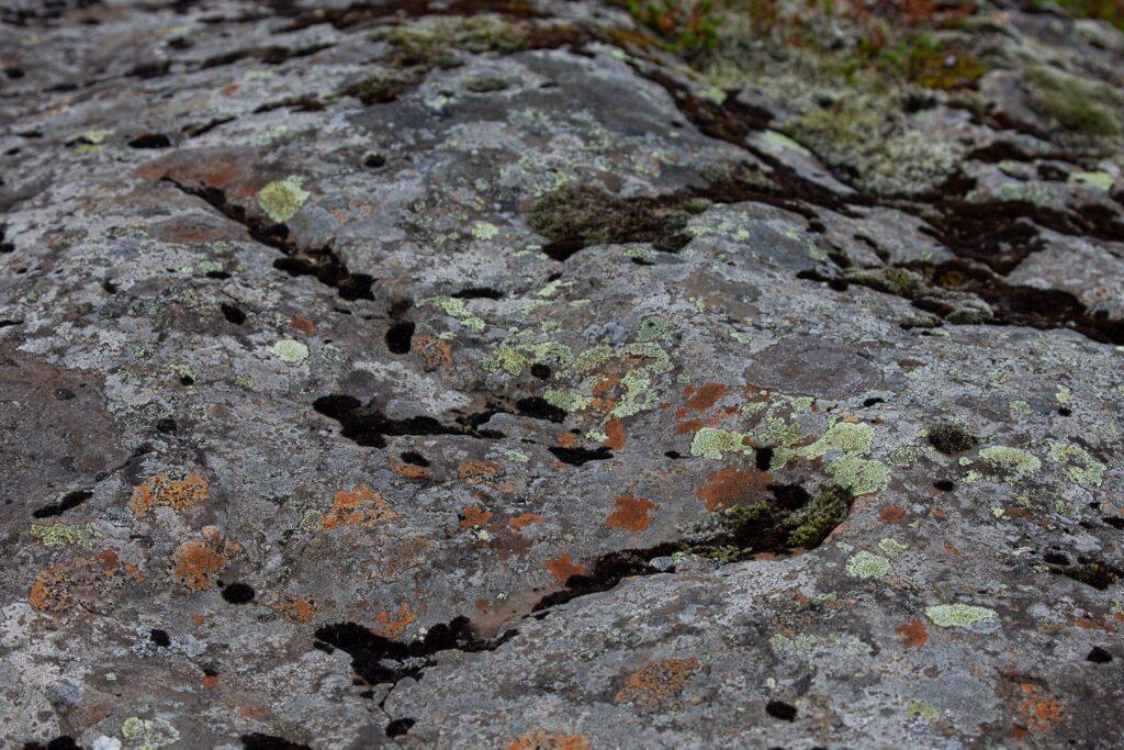 lichen on a grey rock
