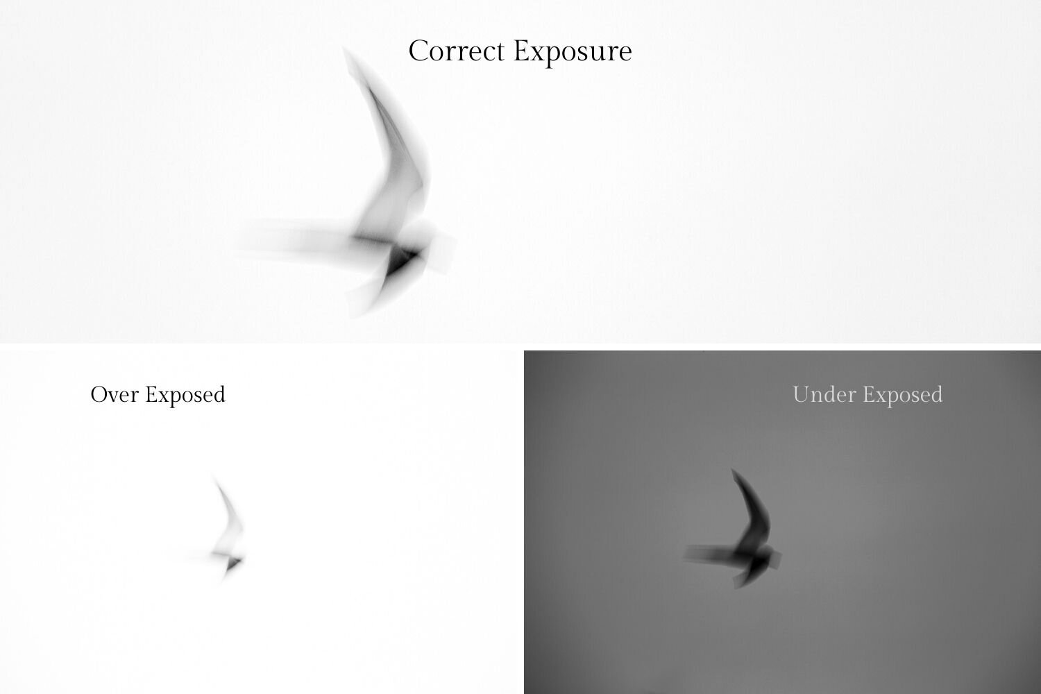 An example of correct exposure in a black and white photograph with over exposure and under exposure demonstrated.