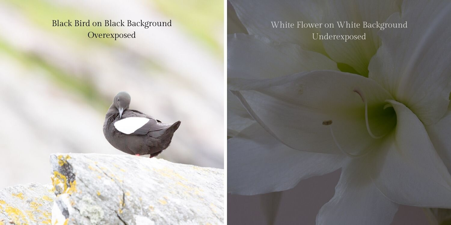 image to demonstrate how camera confuses white and black