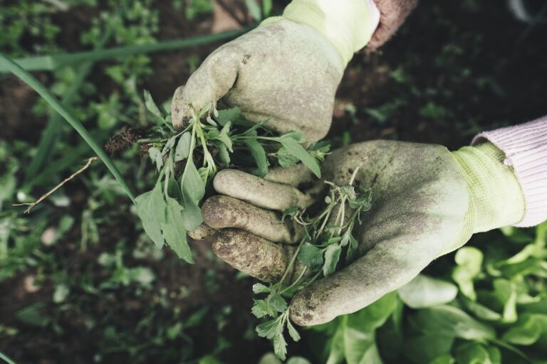 hands with gardening gloves and weeds