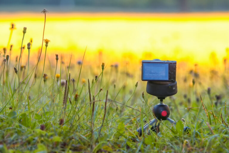 small camera in yellow meadow
