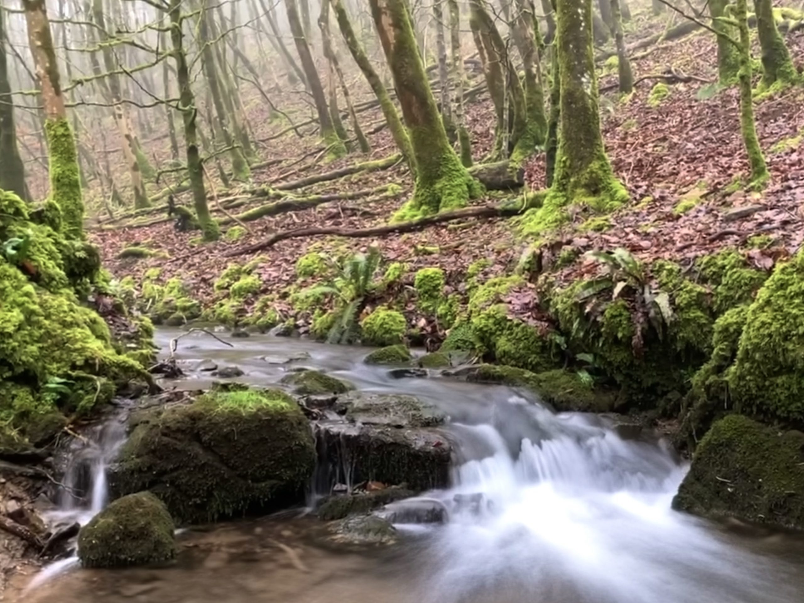 river in woodland with blurred water