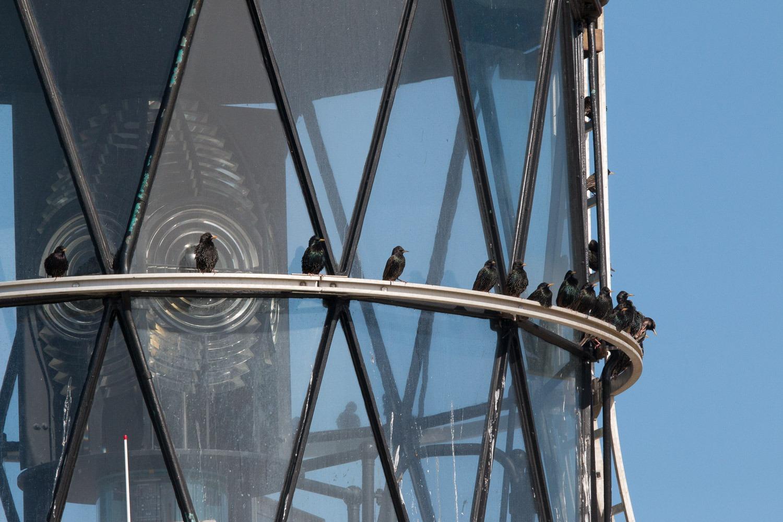 lighthouse light with birds