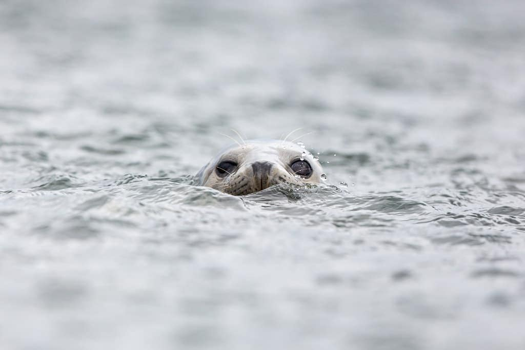 a seal in the water