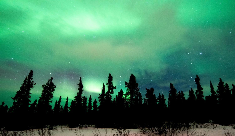 aurora over forest in Fairbanks Alaska