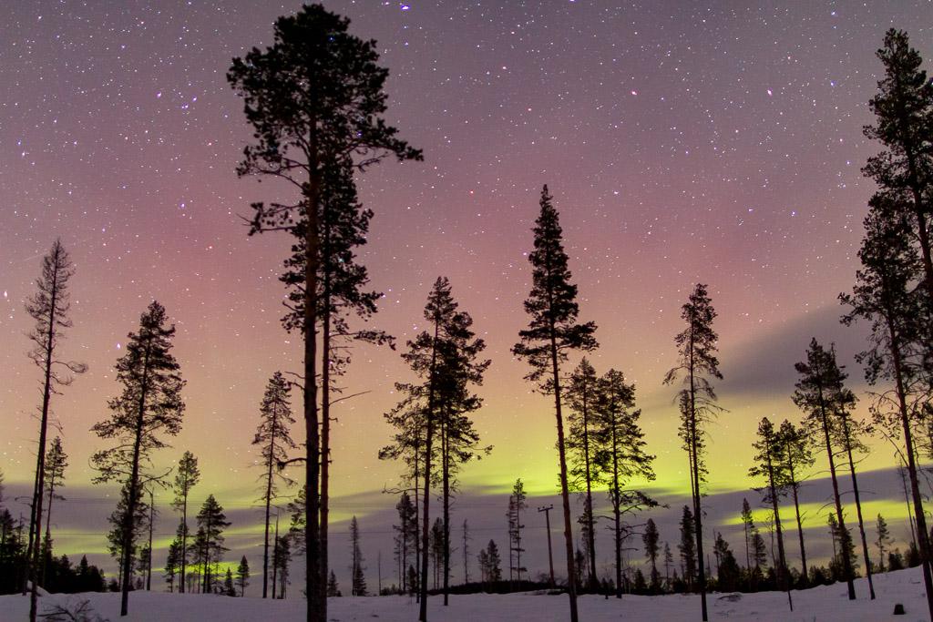 northern lights over pine forest in Sweden