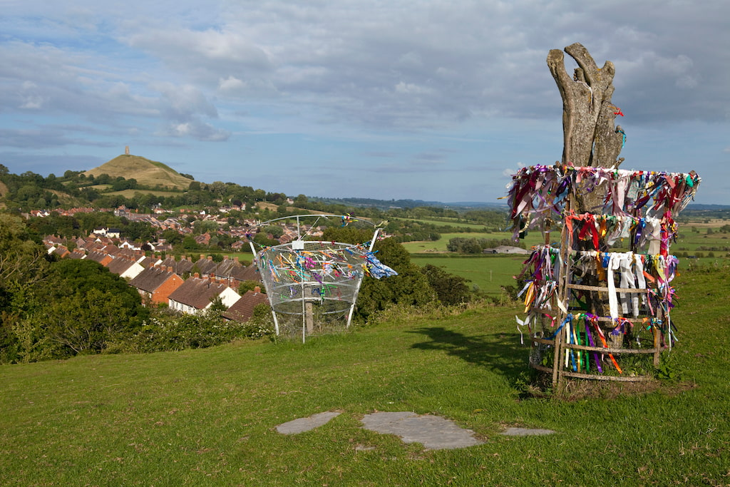 Glastonbury thorn remains with the Tor behind